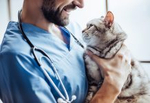 Pourquoi travailler le référencement naturel de votre site vétérinaire ?